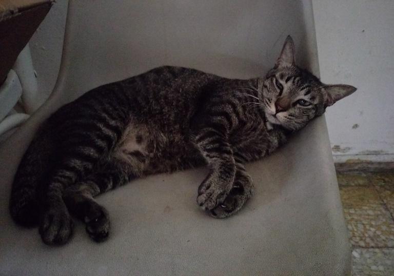 Sam Bikelah Cat