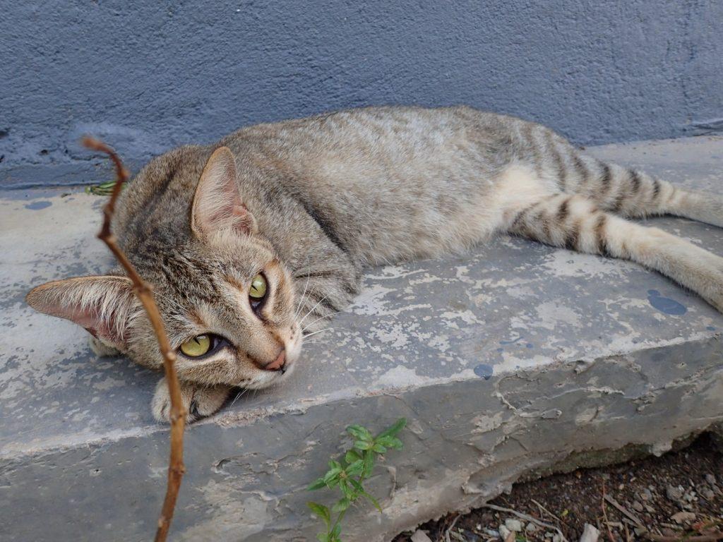 Bikelah Pulau Aman Cat