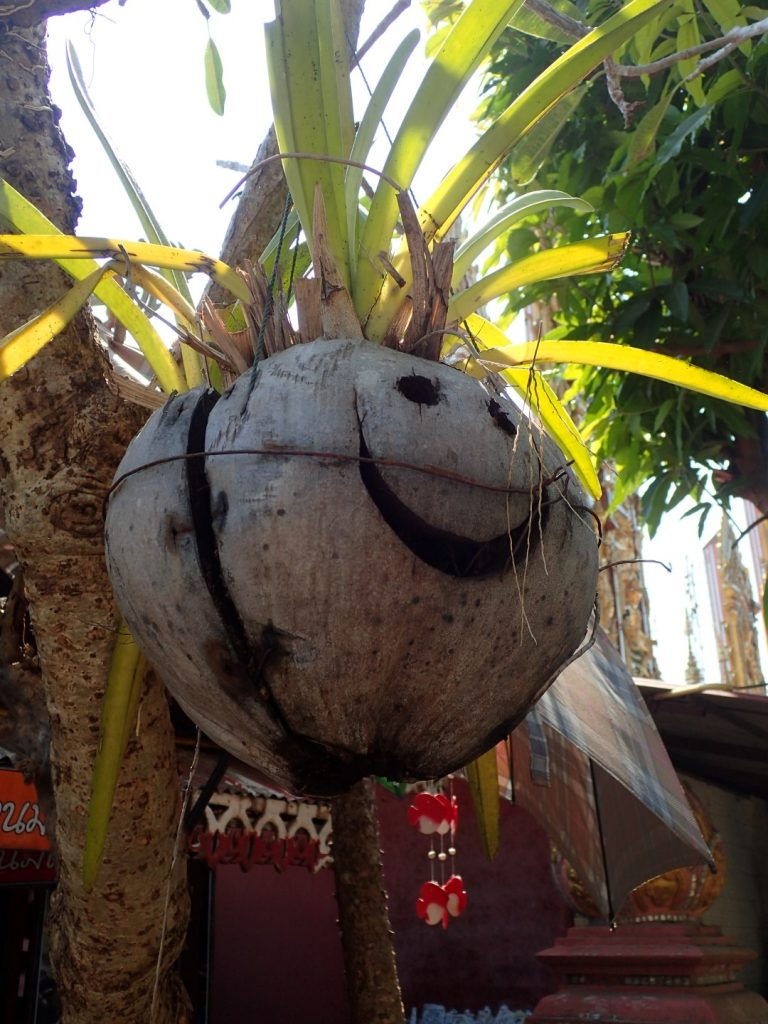 Chiang Rai Bikelah Coconut