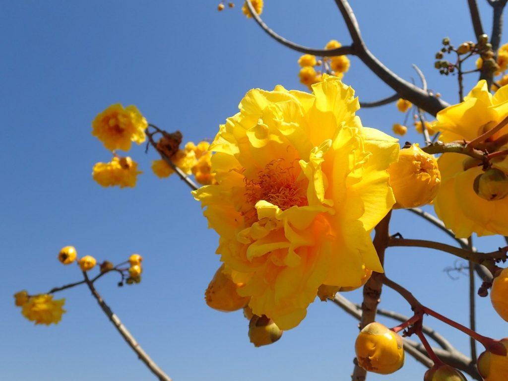 Chiang Rai Yellow Cotton Bikelah