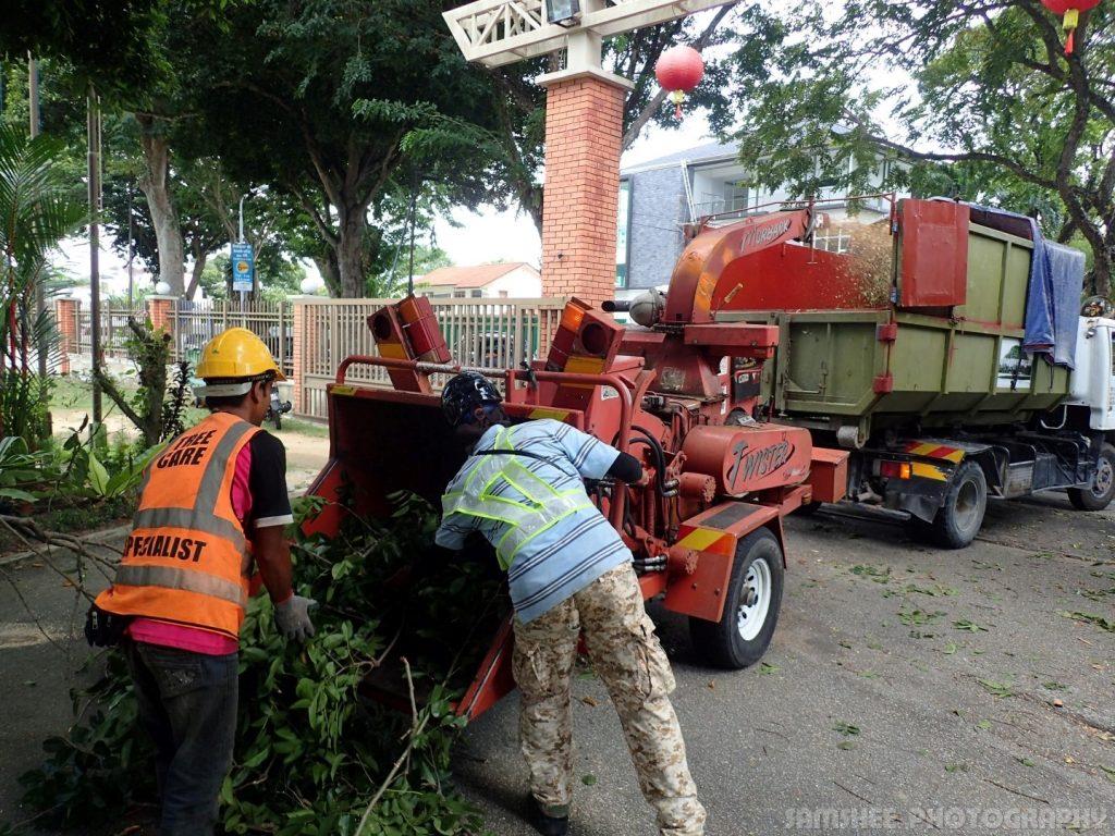 Arborists At Work Penang Heritage Trees Grinder