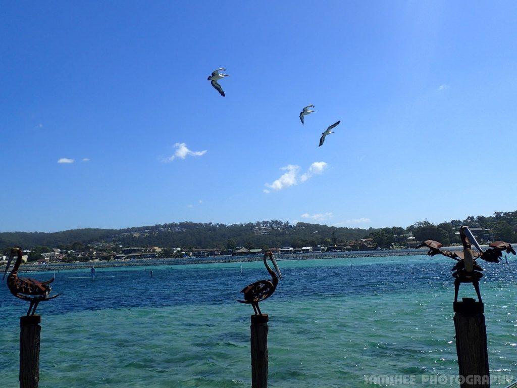 Bega Sydney Beautiful Beach Blue Waters