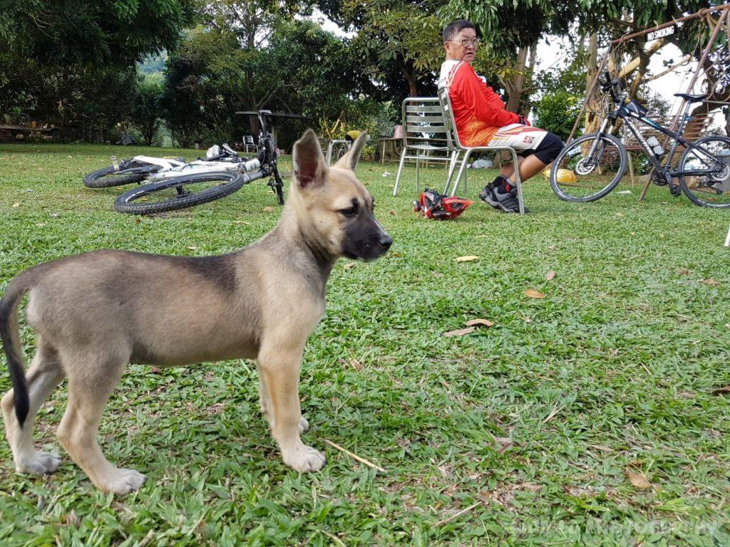 Carpet Hill Cycling Penang Doggy Grass