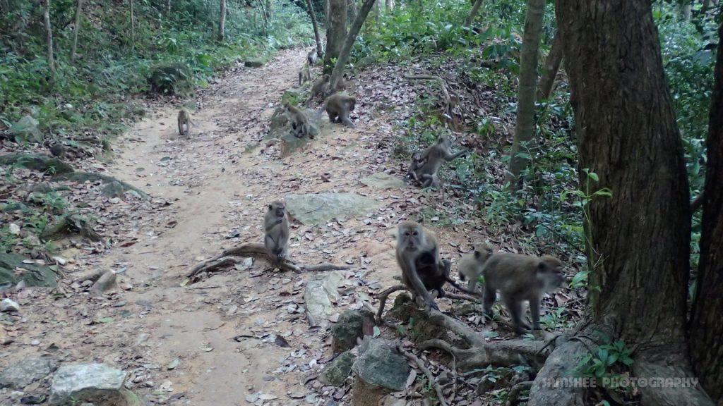 Monkeying Around Penang