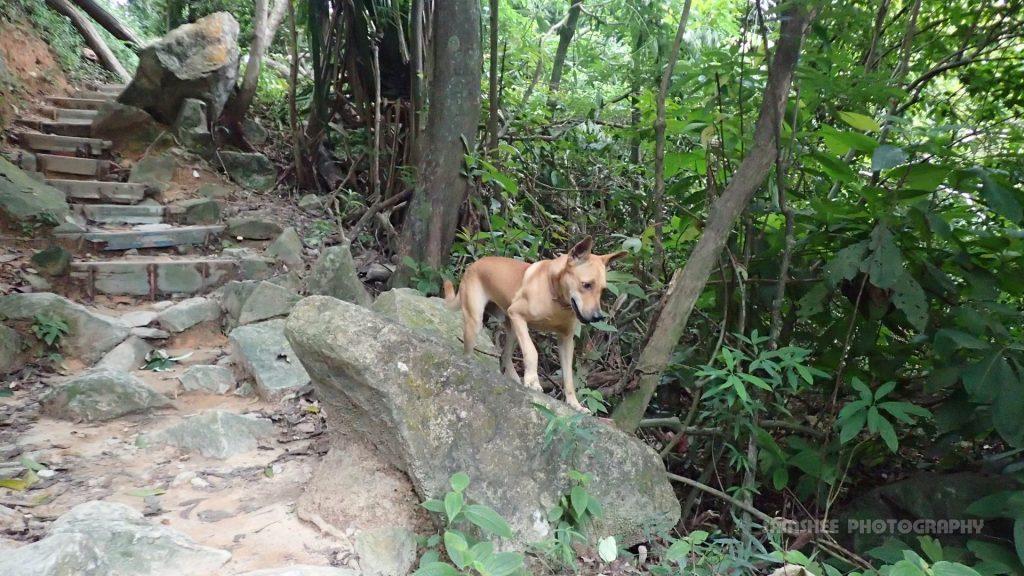 Penang Hill Bukit Cendana Moon Gate Sam
