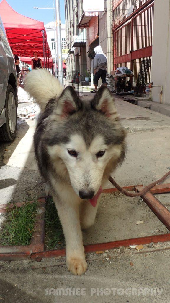 Penang Dog